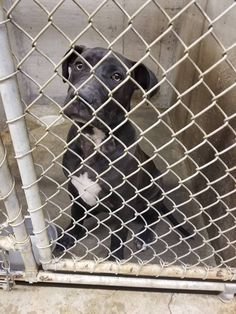 6-3-17 DIES TUESDAY!!! BIG SPRING, TX 6 Month Old!!! PLEASE HELP THIS CUTE BUT BEYOND SAD, HEARTBROKEN 6 MONTH OLD PUPPY, SHE LOOKS SO DEFEATED, WITH GOOD REASON SHE WILL BE KILLED TUESDAY!!!!! THEY HAVE ALREADY KILLED 5 BECAUSE THEY WERE SICK!!!! ALL JUST 8 WEEKS OLD, THEY ARE RUTHLESS, AND SO IS THE OWNER THAT DUMPED HER HERE TO DIE, PLEASE PLEDGE AND SHARE NO ONE SEES THEM, HAVE VERY LITTLE CHANCE PLEASE HAVE A HEART AND HELP SAVE HER K13 - BIG PRING ANIMAL SHELTER, TX 432-264-2372…