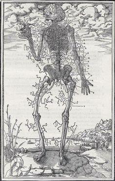 Nerves of the body, from Charles Estienne's De dissectione partium corporis humani libri tres, 1545