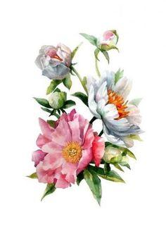 Like the watercolor - softness and movement Botanical Flowers, Botanical Illustration, Botanical Prints, Rose Flowers, Roses, Flower Prints, Flower Art, Watercolor Flowers, Watercolor Paintings