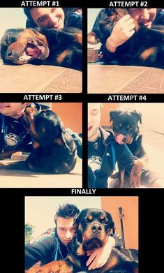 Selfies. Rotties have an awesome sense of humor. Everything amuses them. Lol. ❤ these pics.