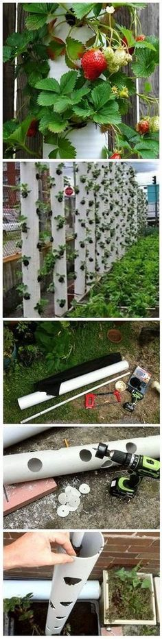 Hydroponic Gardening Ideas Aquaponics System - How to Make a Vertical Strawberry Tube Planter Vertical Vegetable Gardens, Veg Garden, Edible Garden, Garden Planters, Lawn And Garden, Strawberry Planters, Strawberry Garden, Container Strawberries, Hydroponic Strawberries