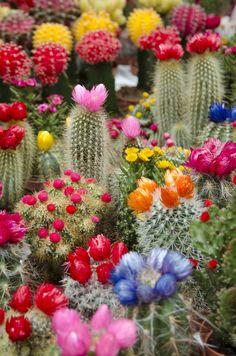 cactus Amsterdam Netherlands Flower Market colorful plants