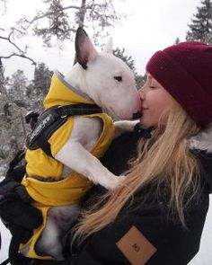 Uplifting So You Want A American Pit Bull Terrier Ideas. Fabulous So You Want A American Pit Bull Terrier Ideas. Perros Bull Terrier, Chien Bull Terrier, Mini Bull Terriers, Miniature Bull Terrier, Bull Terrier Puppy, English Bull Terriers, Cute Puppies, Cute Dogs, Dogs And Puppies