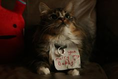 With a kitten this smooth of course she said yes!