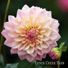 All Flowers, Garden Gates, Lynch, Planting Flowers, Grass, Bloom, Plants, Lavender, Image