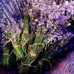 Moja pierwsza lawenda w tym roku. My first lavender this year. Cudo :-) #life #lifestyle #goodlife #nature #inspiration #love #happiness #dlasiebie #natura #szczescie #radość