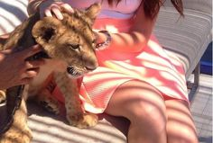 Animal Services investigating reports of lion cub at Toronto lounge - CityNews