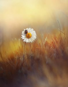 *** by Laura Pashkevich on 500px