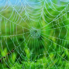 il web?