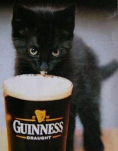 Dark kittens prefer stout.