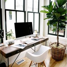 Sunday styling!  We love the use of this gorgeous fiscus plant combined with lots of natural light to make this home office a light and breezy space to work from. If you're dreaming g of creating a space this amazing and need a hand get in touch hello@empireofstyle.com.au  #homeoffice #interiorstyling #interiordesigners #fiscus #fiddleleaf #homesweethome #sunday #homestyling #interiorsdesign