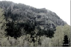 Photo of the Day by A. F. Litt: January 28, 2012, Mist Falls