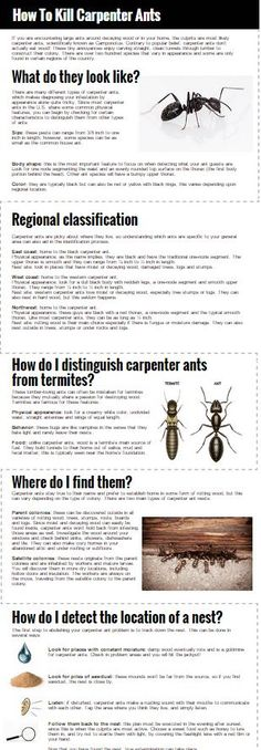 How to Kill Carpenter Ants Kill Carpenter Ants, Carpenter Bee, Termite Pest Control, Diy Pest Control, Big Black Ants, Ants With Wings, Household Pests, Household Tips, Ant Problem