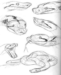 Step 4 How To Draw A Snake Head Draw Snake Heads Drawing Snake