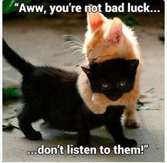 Aww you're not bad luck, don't listen to them! Friday the is upon us again, so why not celebrate (or try to survive all the bad luck?) in the spookiest way possible with 50 of the best funny memes out there. If you've ever wondered why Friday the Animals And Pets, Baby Animals, Funny Animals, Cute Animals, Kittens Cutest, Cats And Kittens, Cute Cats, Crazy Cat Lady, Crazy Cats