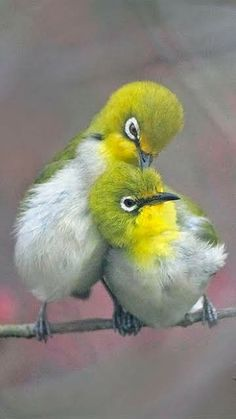 What are these birds? I welcome knowledgeable comments. Cute Birds, Small Birds, Pretty Birds, Little Birds, Colorful Birds, Beautiful Birds, Animals Beautiful, Baby Animals, Cute Animals