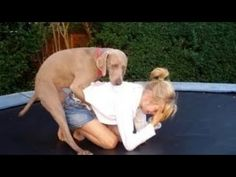 Try Not To Laugh Or Grin Watching This! (Challenge Impossible) Funny Videos - YouTube