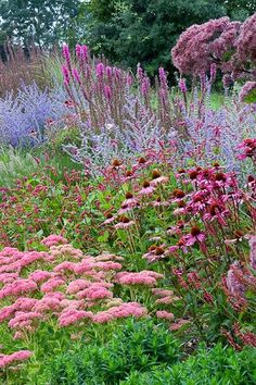 Soft combination: blue perovskia with pink sedum, Echinacea, Eupatorium and liatris.