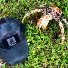 "TAC-UP GEAR på Instagram: ""I guess the Robber Crab 🦀 want to nick the patch! Crazy sent in picture, Many thanks! 😮🦀💪🏻👊🏻🌿"" Flip Flops, Photos, Pictures, Sandals, Instagram, Products, Shoes Sandals, Beach Sandals, Sandal"