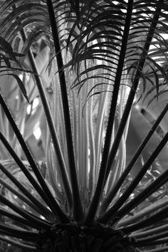 Jungle. Photo by jean johnston -- National Geographic Your Shot