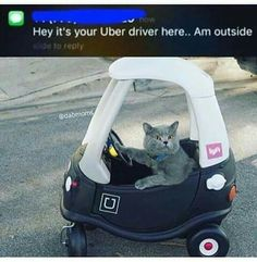 If kittehs were Uber drivers