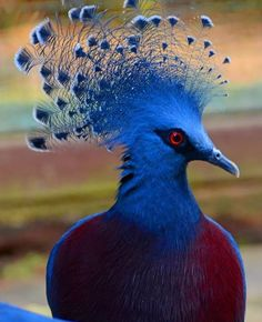 33 Colorful Animals Who Look Photoshopped Pretty Birds, Beautiful Birds, Animals Beautiful, Rare Birds, Exotic Birds, Colorful Animals, Colorful Birds, Funny Birds, Bird Pictures