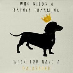 Everything About The Dachshund Dogs Piebald Dachshund, Dachshund Funny, Mini Dachshund, Dachshund Puppies, Daschund, Dachshund Clothes, Silly Dogs, Weenie Dogs, Dog Rules