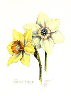 Daffodils Watercolor at ArtistRising.com