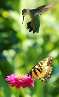 Hummingbird and butterfly with flower via Carol's Country Sunshine on Facebook