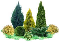 Вечнозеленый Сад, Японский Сад, Лесистый Сад, Озеленение Заднего Двора, Кактус Растения, Красивые Сады, Сады, Сад С Орхидеями, Ландшафт
