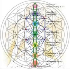 sacred geometry chakras flower of life Sacred Geometry Symbols, Yoga Studio Design, Les Chakras, Seed Of Life, Spirit Science, Crystal Grid, Flower Of Life, Mandala Art, Flower Mandala