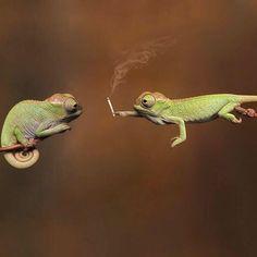#puffpuffpass #weedstagram #420living #highlife #highaf #highsociety #weeddelivery #marijuana #maryjane