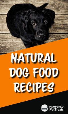 Healthy Homemade Dog Food Recipes And Organic Treats - Healthy Dog Food Recipes Homemade Dog Food Is Healthier Than The Mass Produced Dog Food Brands And Significantly Cheaper Than Most Of The Organic Dog Food Brands Making Your Own Dog Food Does Take Organic Dog Food, Natural Dog Food, Holistic Dog Food, Healthy Dog Food Brands, Pet Organization, Dog Tags Military, Dog Nutrition, Dog Varieties, Dog Training Techniques