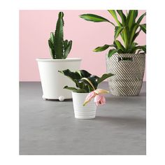 IKEA - IKEA PS FEJÖ, Self-watering plant pot, white, Will help your plants thrive, even if you can't water regularly. The self-watering insert keeps the soil moist. Casters make the plant pot easy to move. Ikea Ps, Potted Plants Patio, Indoor Plant Pots, Self Watering Plants, Coloured Grout, Recycling Facility, Decoration Plante, Ikea Family, Bathroom Plants