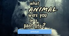 Quiz: What Animal Were You In A Past Life?You were the Owl. Graceful, quiet, and majestic, you glide silently through the night. You are self sufficient, independent, and make the most of everything around you. You are not very picky about what you like, and when you love something, it will be forever. You would make a wonderful parent, but in no way would you spoil your children; they would be taught how to look after themselves. You are a symbol of guidance.
