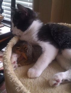 """Last pinner said, """"Squirrel found a friend through the doggy door, and keeps coming back for more cuddles."""""""