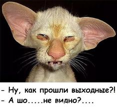 Russian Jokes, Laughter The Best Medicine, Cat Tattoo, Burn Calories, Cool Cats, Animal Photography, Funny Pictures, Memes, Amp