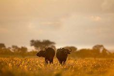 Safari Adventure, Closer To Nature, Tanzania, Wilderness, Tent, Wildlife, Elephant, Explore, Animals