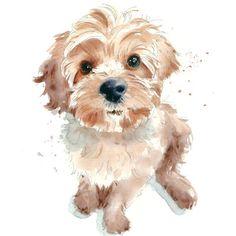 scruffy-puppy-jpg