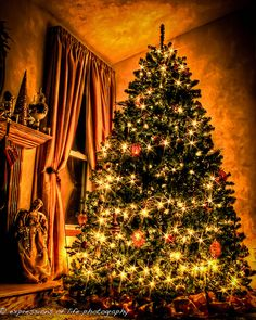 December 7 Tannenbaum by expressions of life photography, via Flickr
