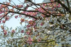 3/29/14, ** photos by Zulma **, Aviano Italy, Zulma Mace, Spring is in the Air!