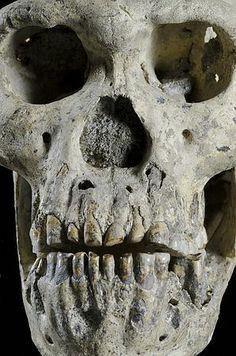 グルジアのドマニシ遺跡で発見された約180万年前の原人頭骨化石。成人男性とみられる(同国国立博物館提供) ▼18Oct2013時事通信|原人の完全な頭骨化石発見=180万年前、グルジア遺跡で http://www.jiji.com/jc/zc?k=201310/2013101800037 #Georgia #Gurcustan #Gurcistan #Georgie #Georgien #Dmanisi #Homo_erectus #fossil_hominid #fossil_man #Skull