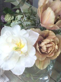 antique color tulip 'Belle Époque'