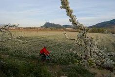 Image result for la floración cieza