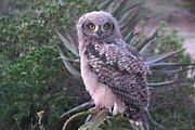 An Owl pays us a visit Provinces Of South Africa, Catcher, Coastal, Trail, Owl, Beach, Animals, Animales, The Beach