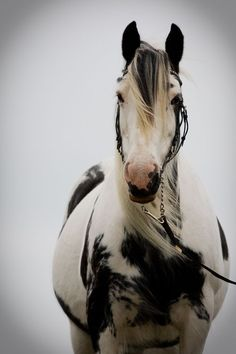 The black and white markings are gorgeous with the gray day sky