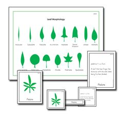 Leaf morphology Nomenclature that includes etymology.