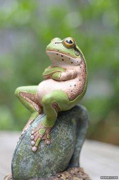 Procrastinating Frog - I'm glad I'm not the only one that procrastinates.