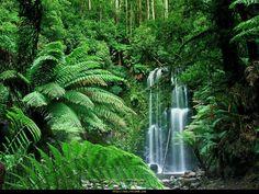 Avustralya-Resimleri-11.jpg (1024×768)
