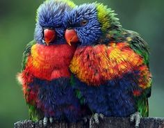 amazing pictures of nature and animals - Google Search